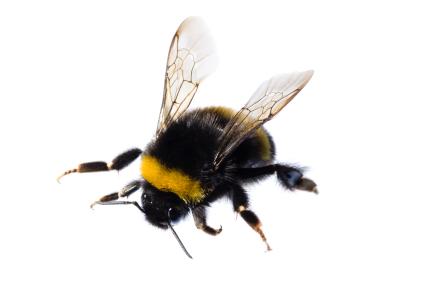 building buzz