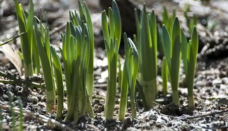 Emerging Seeds