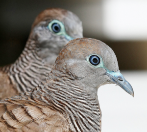 Turtle Doves and Reconsideration Requests